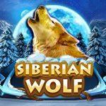 siberian wolf เกมสล็อตที่จะพาเพื่อนๆ ไปสนุกกับเจ้าหมาป่าที่ชื่นชอบการผจญภัย